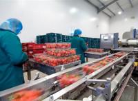 Pakowanie owoców dam pracę w Niemczech bez znajomości języka Kolonia