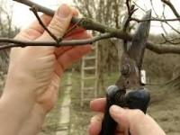 Sezonowa praca w Niemczech przycinanie drzew od zaraz Trewir w sadownictwie
