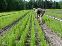 Sezonowa praca Niemcy w leśnictwie jako pracownik do zadrzewiania lasów z zakwaterowaniem