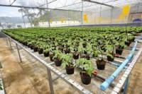 Ellwangen oferta pracy w Niemczech w ogrodnictwie dla pary od marca 2016