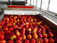 Ogłoszenie fizycznej pracy w Niemczech bez języka sortowanie owoców Wuppertal