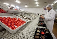 Praca w Niemczech bez znajomości języka pakowanie czekolad od zaraz Dortmund