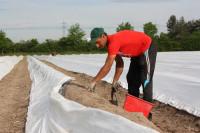 Sezonowa praca w Niemczech przy zbiorze szparagów od zaraz Kirchwahlingen