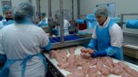 Praca w Niemczech bez języka przy pakowaniu kurczaków od zaraz Paderborn