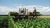 Oferta sezonowej pracy w Niemczech od zaraz przy uprawie, zbiorach tytoniu Koblencja
