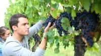 Sezonowa praca Niemcy od zaraz przy zbiorach winogron Kaiserslautern 2016