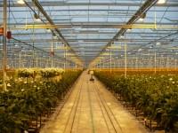 Lipsk oferta sezonowej pracy w Niemczech przy roślinach w ogrodnictwie
