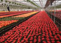 Sezonowa praca Niemcy w ogrodnictwie od zaraz bez języka przy kwiatach w szklarni Löbau