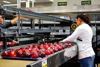 Od zaraz ogłoszenie pracy w Niemczech bez języka sortowanie jabłek Stuttgart