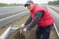 Oferta sezonowej pracy w Niemczech zbiory szparagów 2017 Neuwarendorf