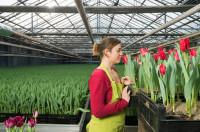 Praca Niemcy w ogrodnictwie dla par przy sadzeniu kwiatów Emsland 2017