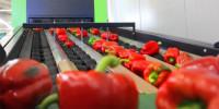 Dam pracę w Niemczech 2017 bez znajomości języka sortowanie owoców-warzyw Worms