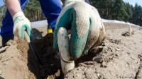 Sezonowa praca Niemcy od zaraz przy zbiorze szparagów bez języka 2017