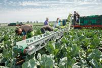 Od zaraz sezonowa praca w Niemczech przy zbiorach warzyw w Dreźnie 2017