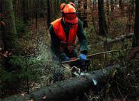 Leśnictwo dam sezonową pracę w Niemczech dla pilarza-drwala w Leimen
