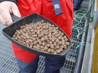 Dam pracę w Niemczech przy produkcji karmy dla zwierząt od zaraz, Bretten