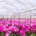 orchidee kwiaty szklarnia ogrodnictwo