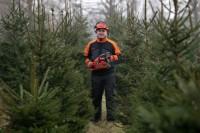 Niemcy praca sezonowa od zaraz w leśnictwie przy choinkach bez języka Neustrelitz