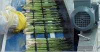 Fizyczna, tymczasowa praca w Niemczech bez języka przy sortowaniu warzyw na hali, Inchenhofen