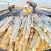 Niemcy praca sezonowa zbiory szparagów 2018