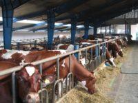 Praca Niemcy przy hodowli krów w rolnictwie od zaraz dla 2 osób lub pary, Bayreuth