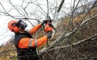 Bez znajomości języka od zaraz Niemcy praca przy usuwaniu krzewów Stuttgart