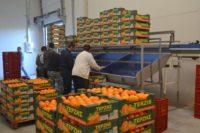 Praca w Niemczech bez języka pakowanie owoców egzotycznych od zaraz Augsburg