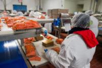 Bez języka oferta pracy w Niemczech na produkcji przy rybach, Stralsund 2018
