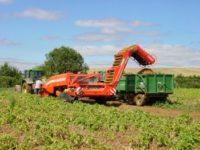 Rolnictwo oferta pracy w Niemczech bez języka przy zbiorach i uprawie ziemniaków, Dargun