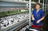 Niemcy praca sezonowa na hali przy zbiorach pieczarek bez języka, Laichingen