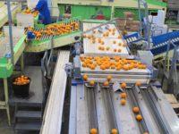 Bez języka oferta fizycznej pracy w Niemczech od zaraz sortowanie owoców Berlin