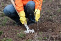 Kolonia dam sezonową pracę w Niemczech bez języka przy drzewkach i krzewach
