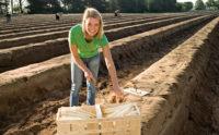 Niemcy praca sezonowa przy zbiorach szparagów od kwietnia 2019 k. Hamburga