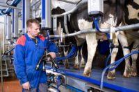 Dojarza praca Niemcy od zaraz w rolnictwie bez języka k. Berlina