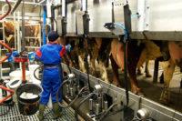 Dojarz oferta sezonowej pracy w Niemczech od zaraz w rolnictwie k. Lubeki