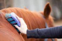 Stajenny Niemcy praca fizyczna przy koniach bez języka z zamieszkaniem, Wessling