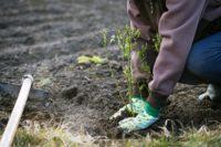 Niemcy praca sezonowa w rolnictwie bez języka przy sadzeniu borówki 2019 Mötzow