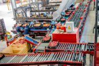 Ogłoszenie fizyczna praca Niemcy bez języka sortowanie owoców od zaraz Hanower